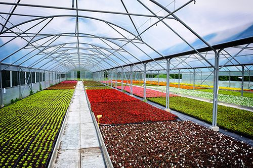 Best Practices for Insuring Greenhouses
